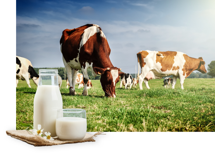 BIO dairy products with an authentic taste