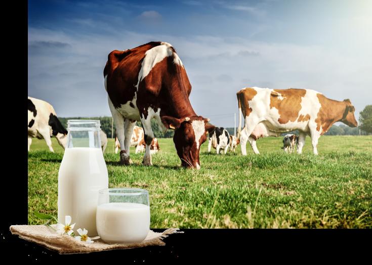 BIO mlečni izdelki pristnega okusa