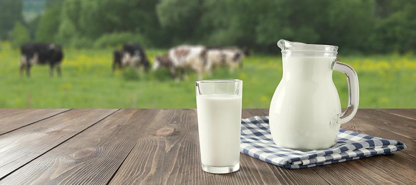 kravje mleko